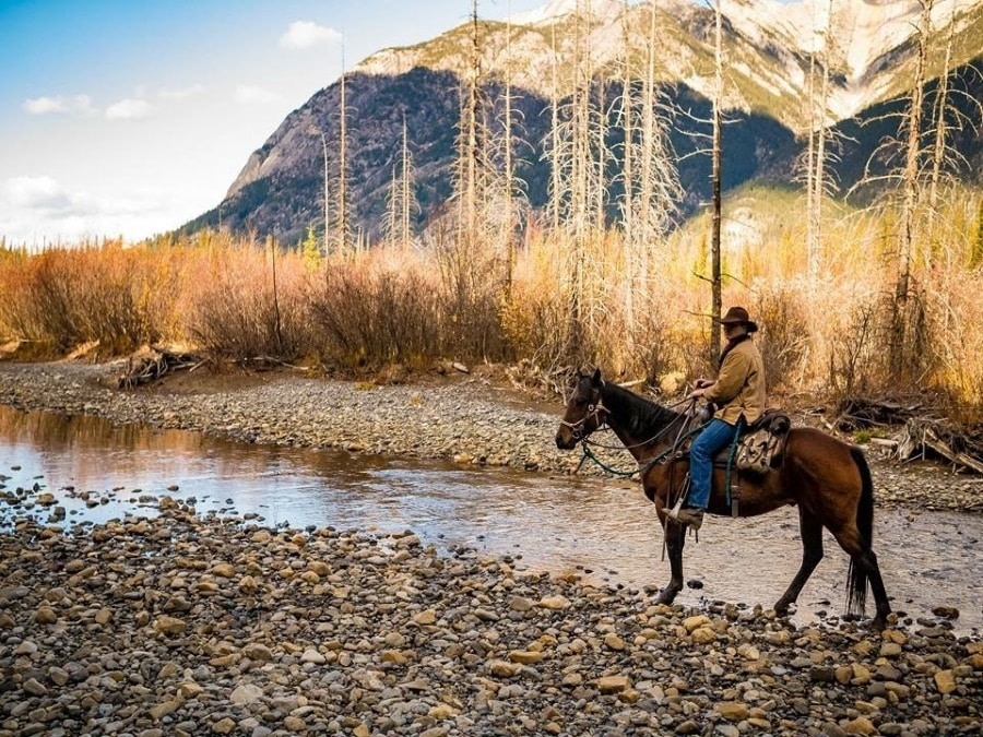 Horses in backcountry