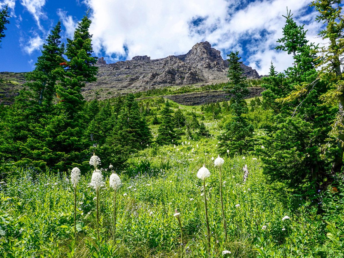Grass and nature at Iceberg Lake Hike in Glacier National Park