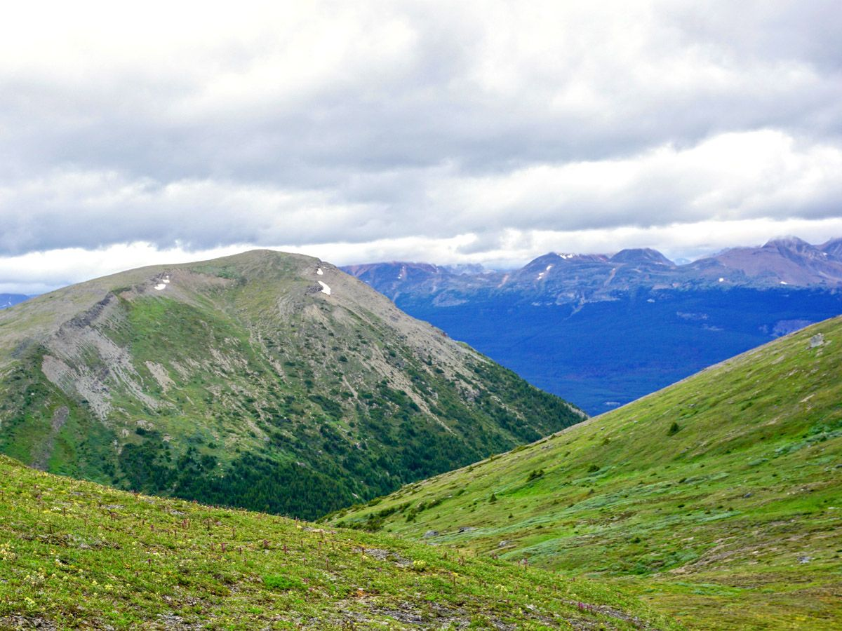 Landscape at Whistlers Mountain and Indian Ridge in Jasper National Park