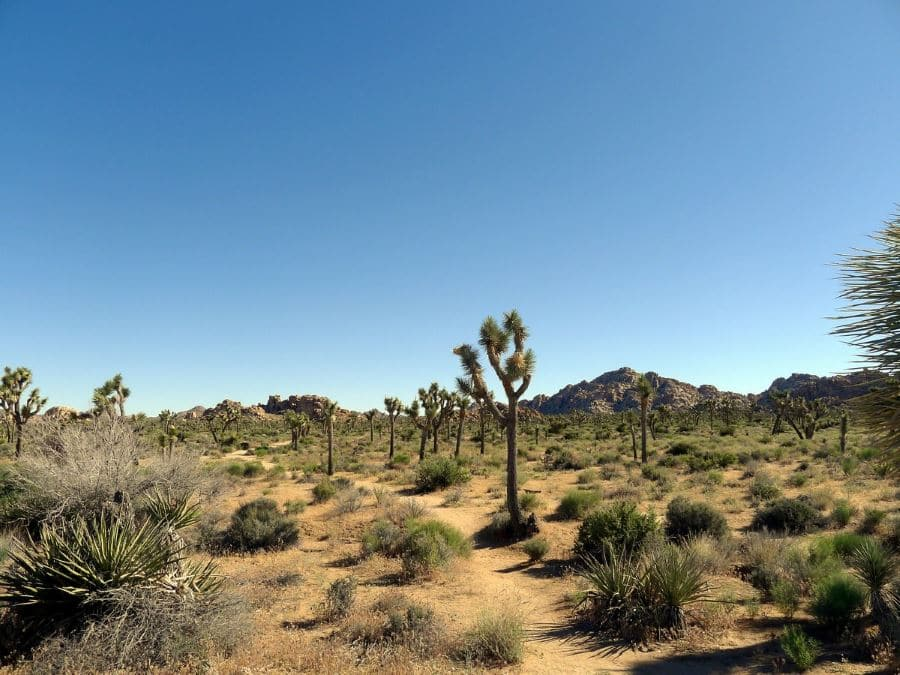 Boy Scout Trail in Joshua Tree National Park
