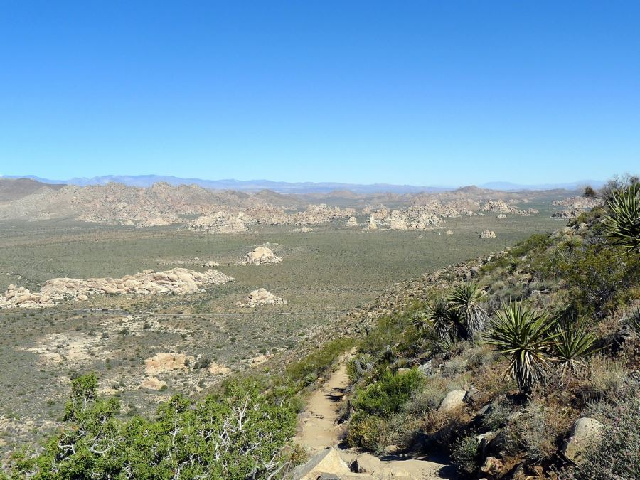 Ryan Mountain is a must-see in Joshua Tree National Park