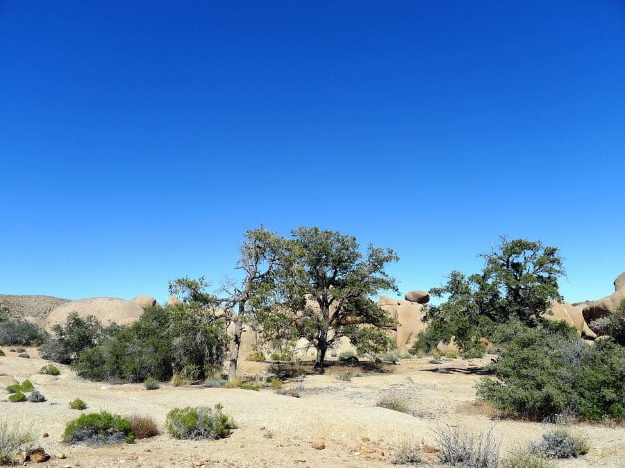 Pine City is a must-see in Joshua Tree National Park