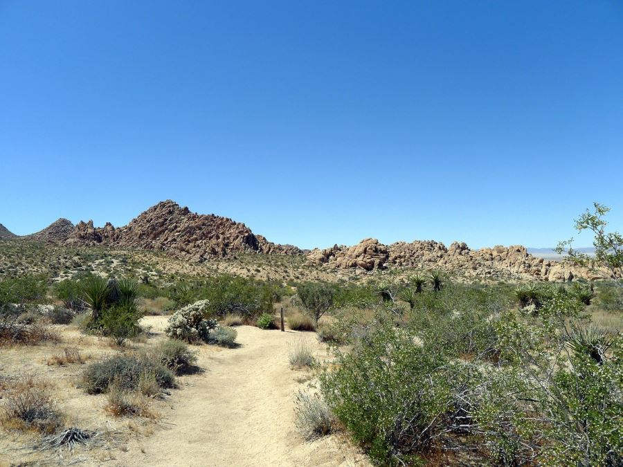Hike the Indian Cove Loop in Joshua Tree National Park to make your trip to California special