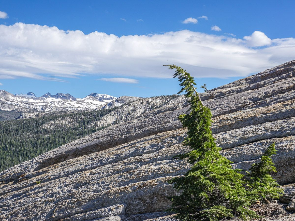 Beautiful mountains in the distance from the Lembert Dome Hike in Yosemite National Park, California