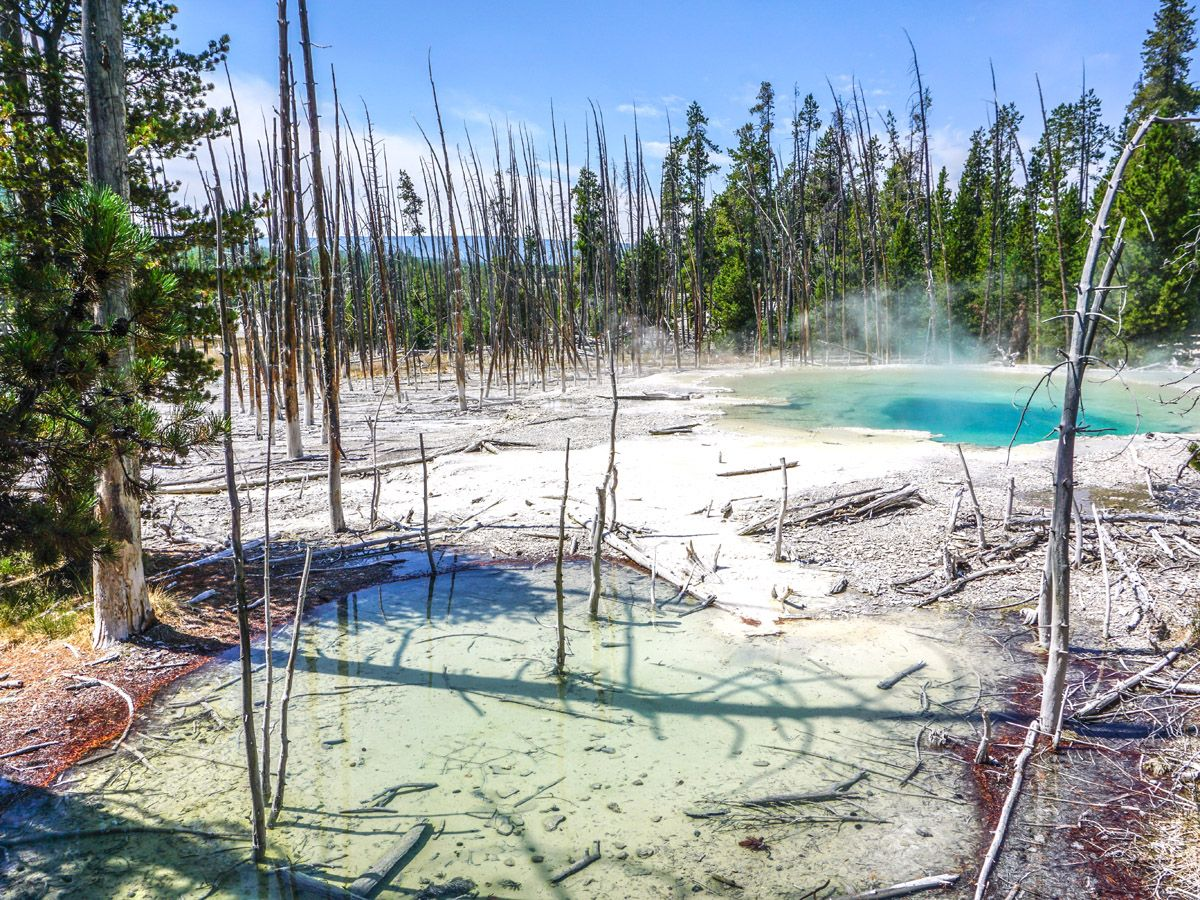 Norris Geyser Hike is a must-do hike in Yellowstone National Park