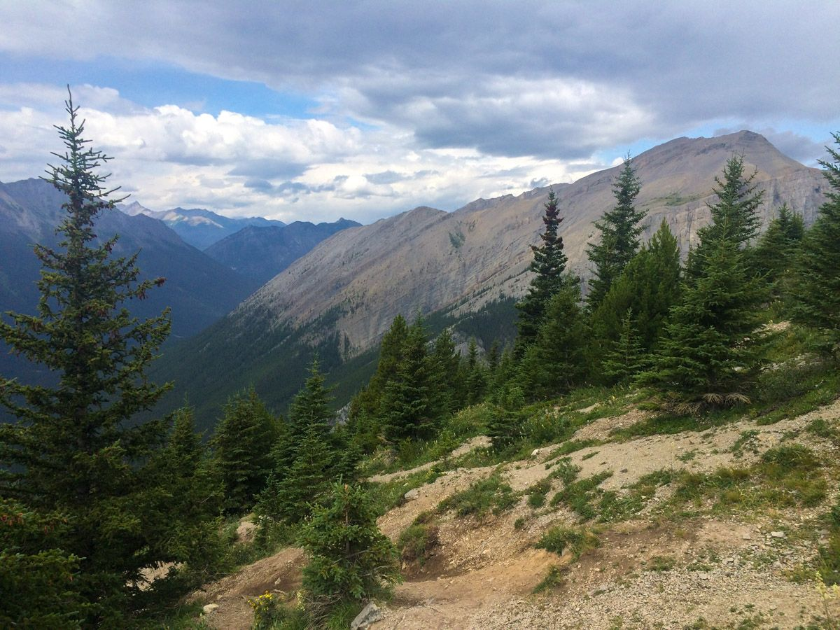 Trees along the trail on the Ha Ling Peak, Miners Peak & The Three Humps Hike from Canmore, the Canadian Rockies