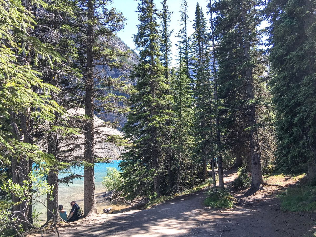 Forest on the Moraine Lake Rockpile and Lakeshore Hike in Lake Louise, Banff National Park