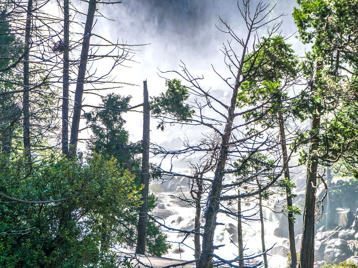 View of the trees at Hike Mist Trail in Yosemite National Park