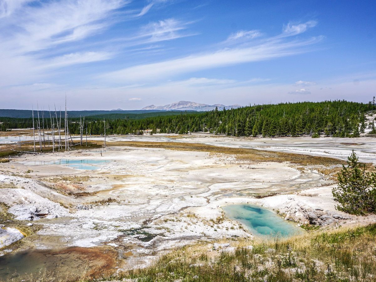 Geyser at Norris Geyser Hike in Yellowstone National Park
