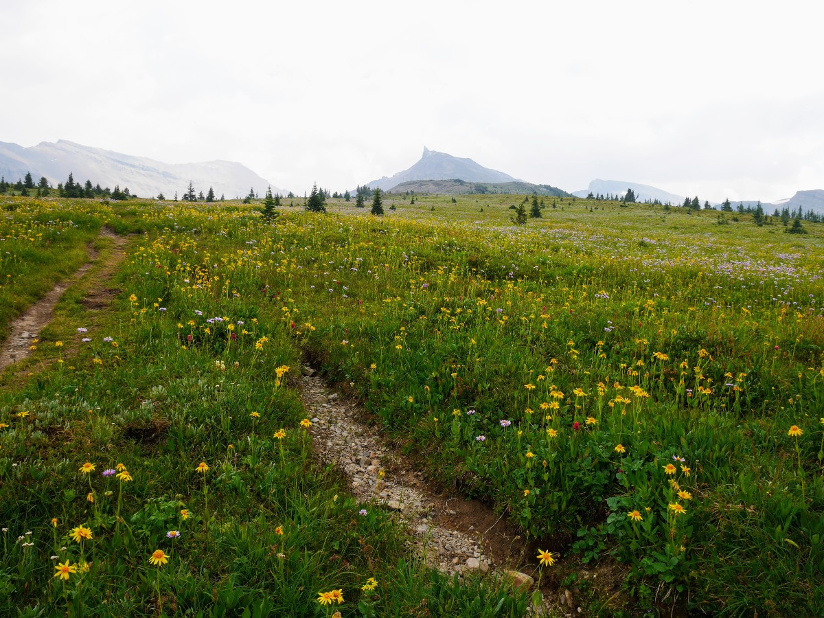 Molar Meadows on the North Molar Pass Hike from the Icefields Parkway near Banff National Park