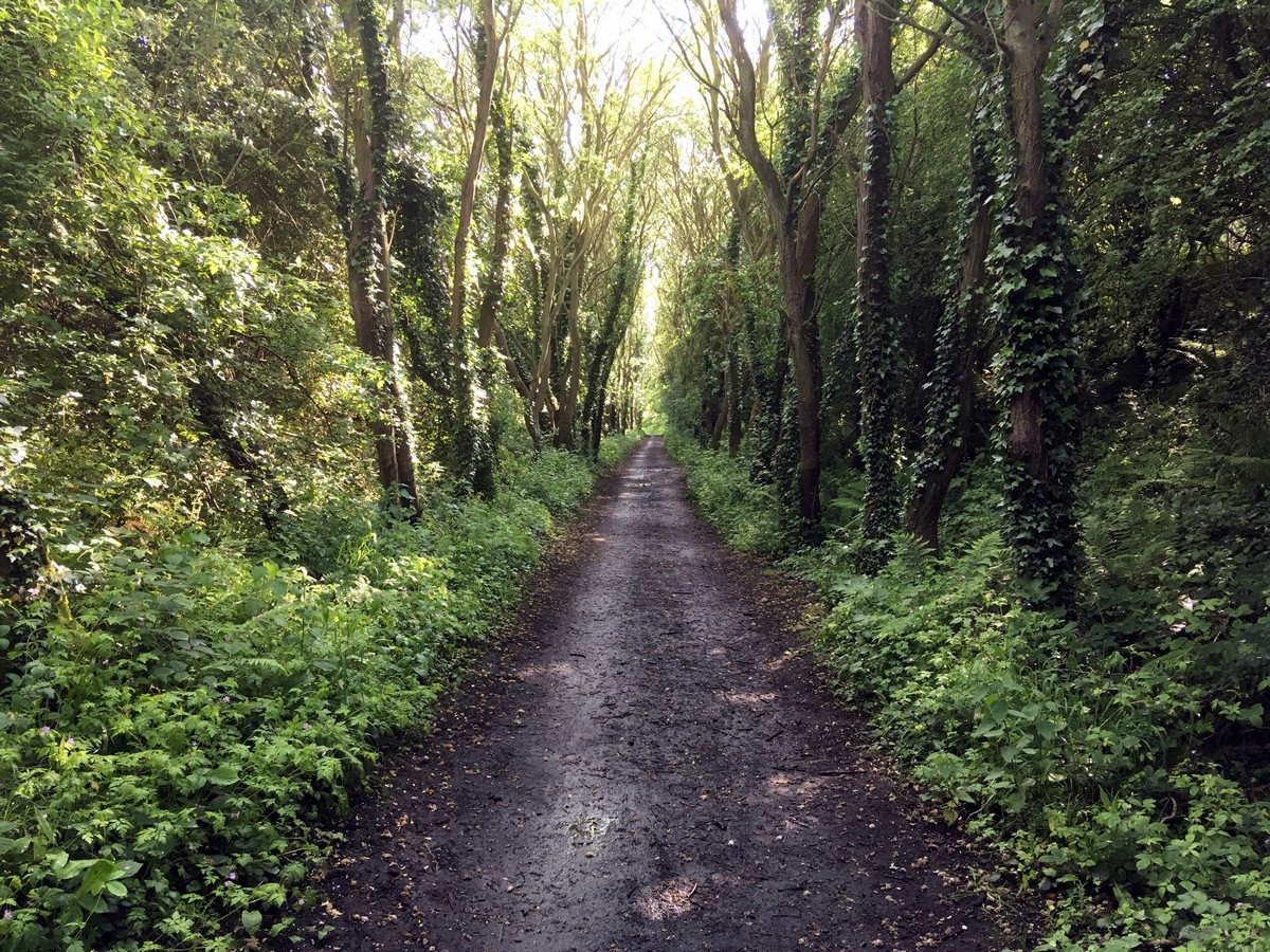 Tree lined old railway track on the Ravenscar and Robin Hood's Bay Hike in North York Moors, England