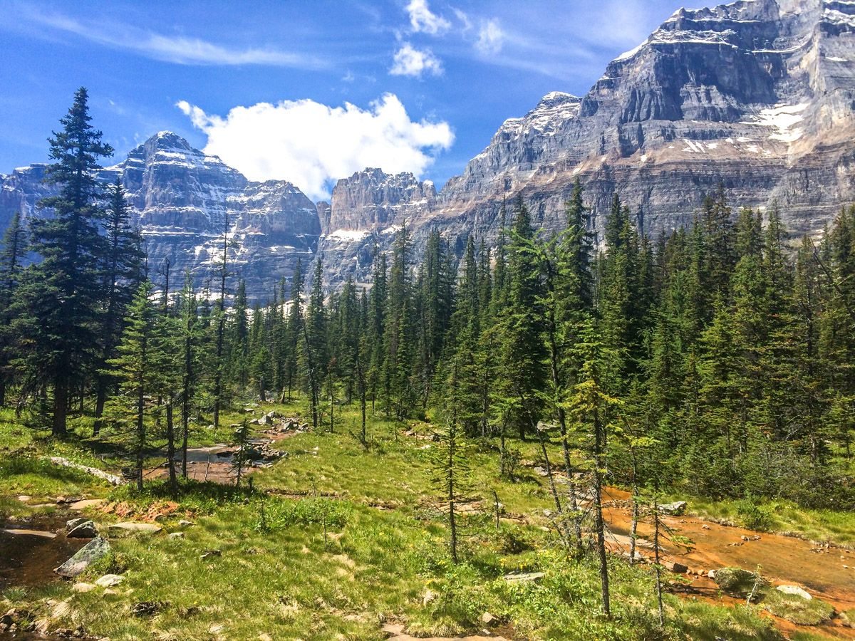 Forest and trail at Paradise Valley Circuit Hike in Lake Louise