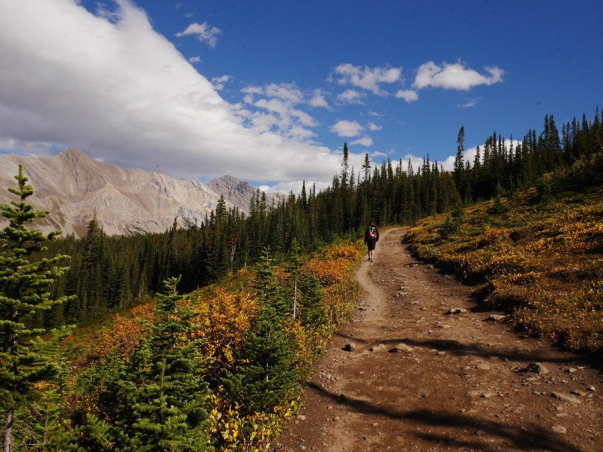 Heading up on the Parker Ridge Trail Hike from the Icefields Parkway near Banff National Park
