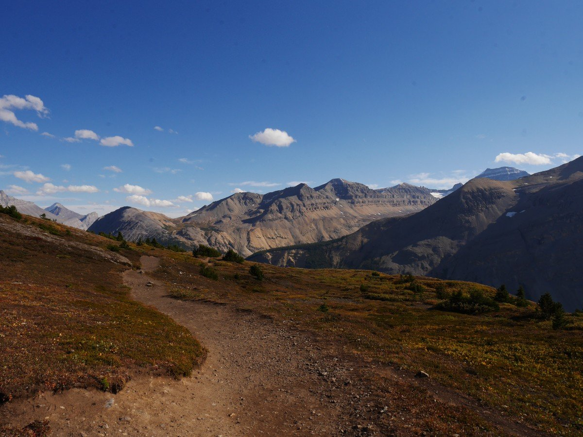 Ridgetop trail and Mt Saskatchewan on the Parker Ridge Trail Hike from the Icefields Parkway near Banff National Park