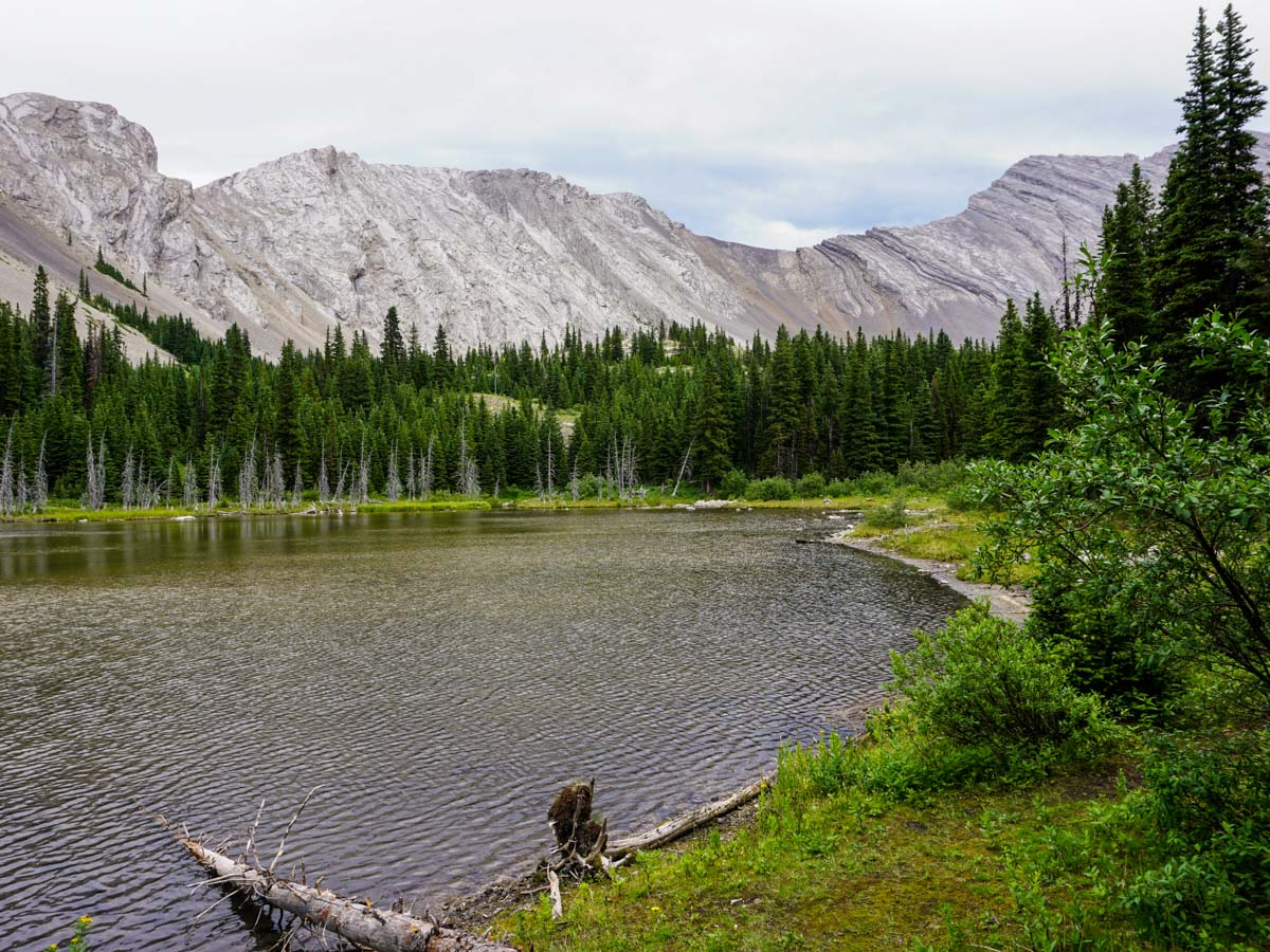 Beautiful trail of the Picklejar Lakes Hike in Kananaskis, near Canmore