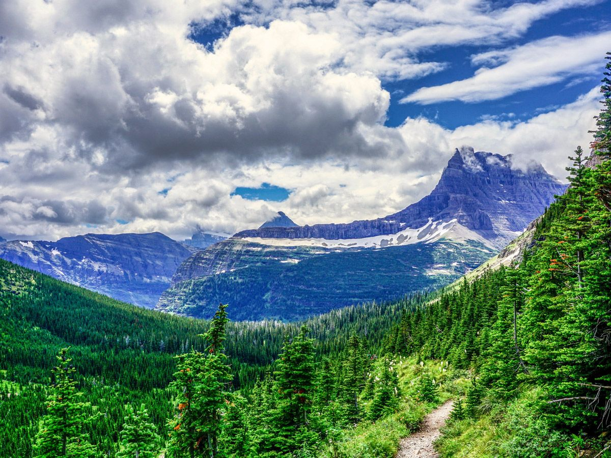 Forest trail at Ptarmigan Tunnel Hike in Glacier National Park