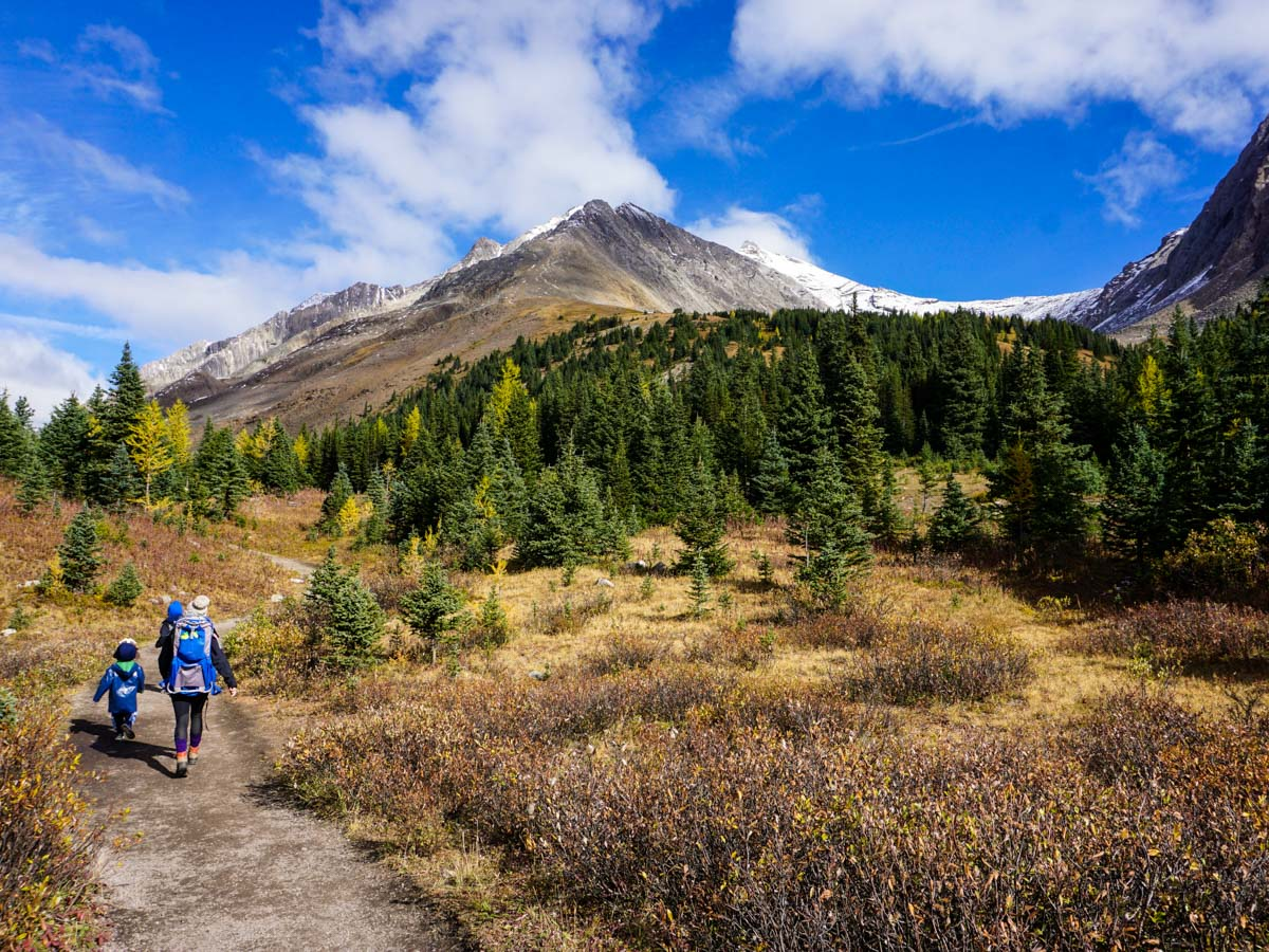 Walking through the highwood meadows on the Ptarmigan Cirque Hike in Kananaskis, near Canmore