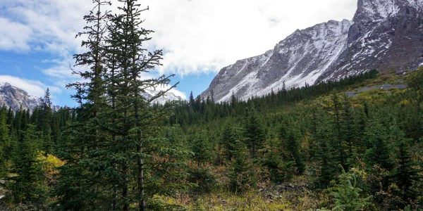 The path of the Rae Glacier Hike in Kananaskis, near Canmore