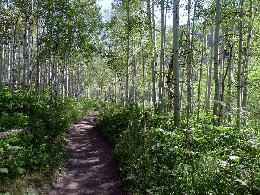 The trail to the Silver Lake in Salt Lake City goes through lush forest