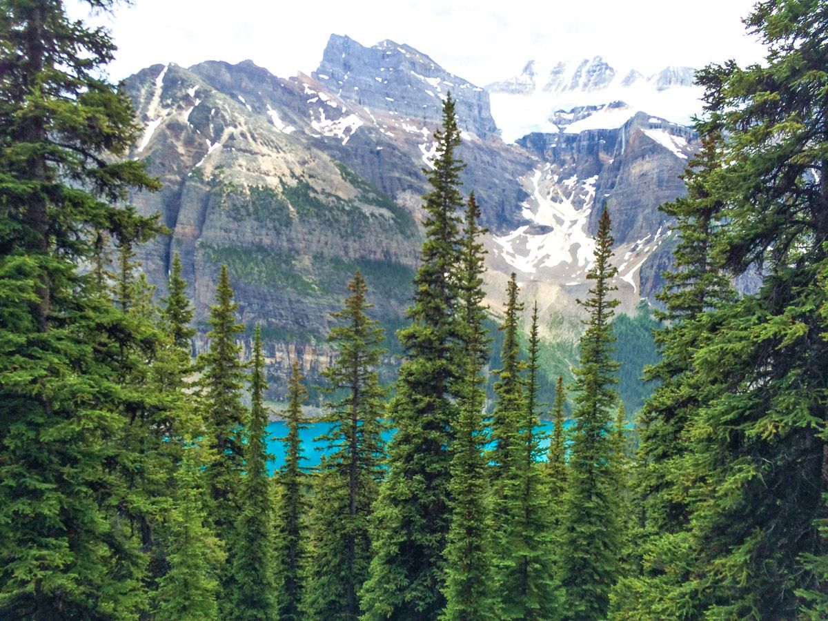 Forest and mountain at Sentinel Pass Hike in Lake Louise