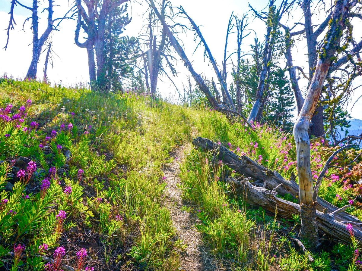 The trail at Sky Rim Hike in Yellowstone National Park