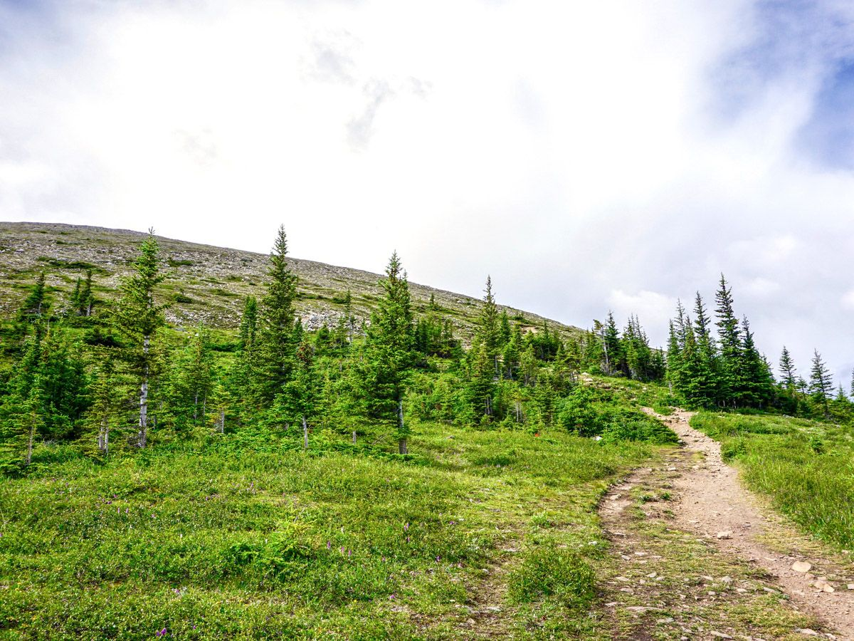 Trail at Whistlers Mountain and Indian Ridge on the Sulphur Skyline Hike in Jasper National Park
