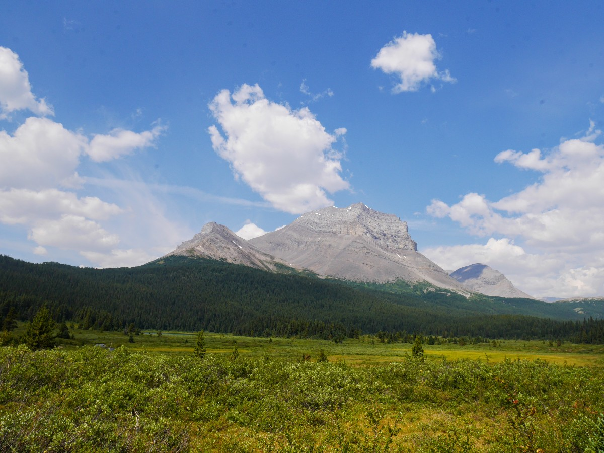 Mt Coleman from Norman Meadow on the Sunset Viewpoint and Pass Hike from the Icefields Parkway near Banff National Park