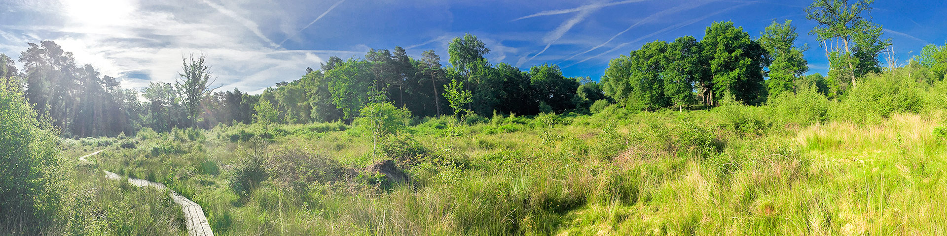 Panorama from the Burnham Beeches Loop hike in Chiltern Hills, England
