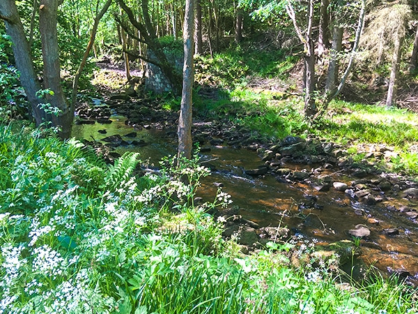 Goathland, Mallyan Spout and the Roman Road hike in North York Moors