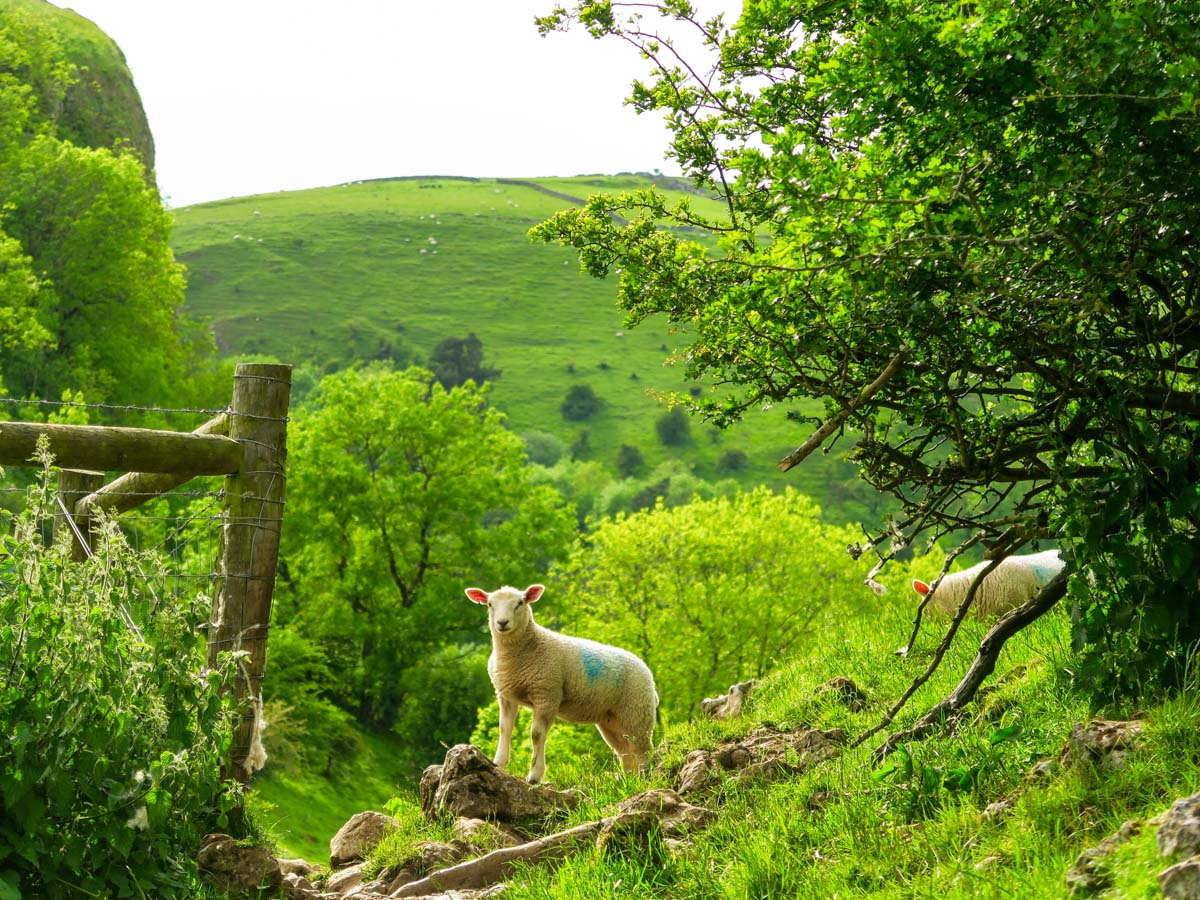 Local traffic on the trails on Thor's Cave and The Manifold Valley Hike in Peak District, England