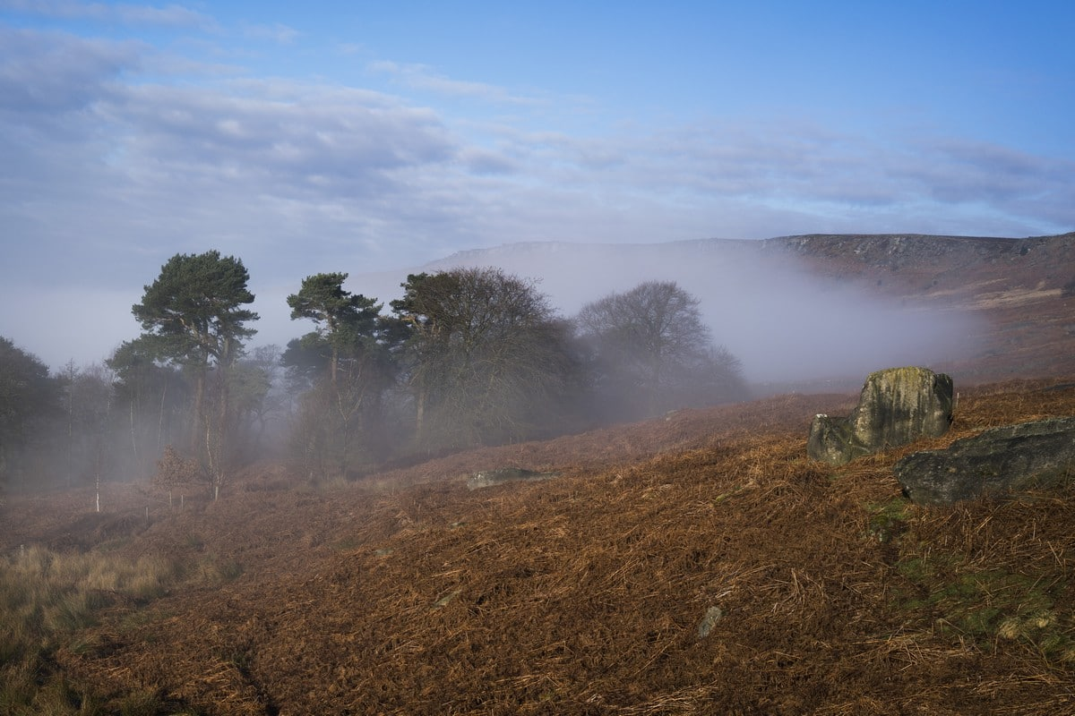 Plantation in the autumn on the Stanage Edge from Hathersage Hike in Peak District, England