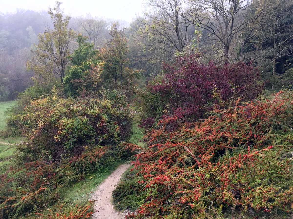 The trail through the disused chalk pit on the Hassocks to Lewes Hike in South Downs, England