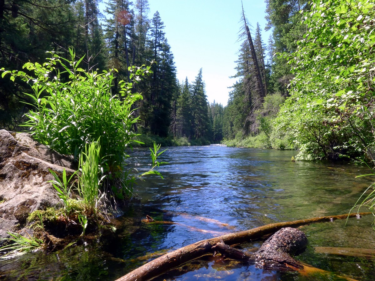 Calm before the rapids on the West Metolius River Hike near Bend, Oregon