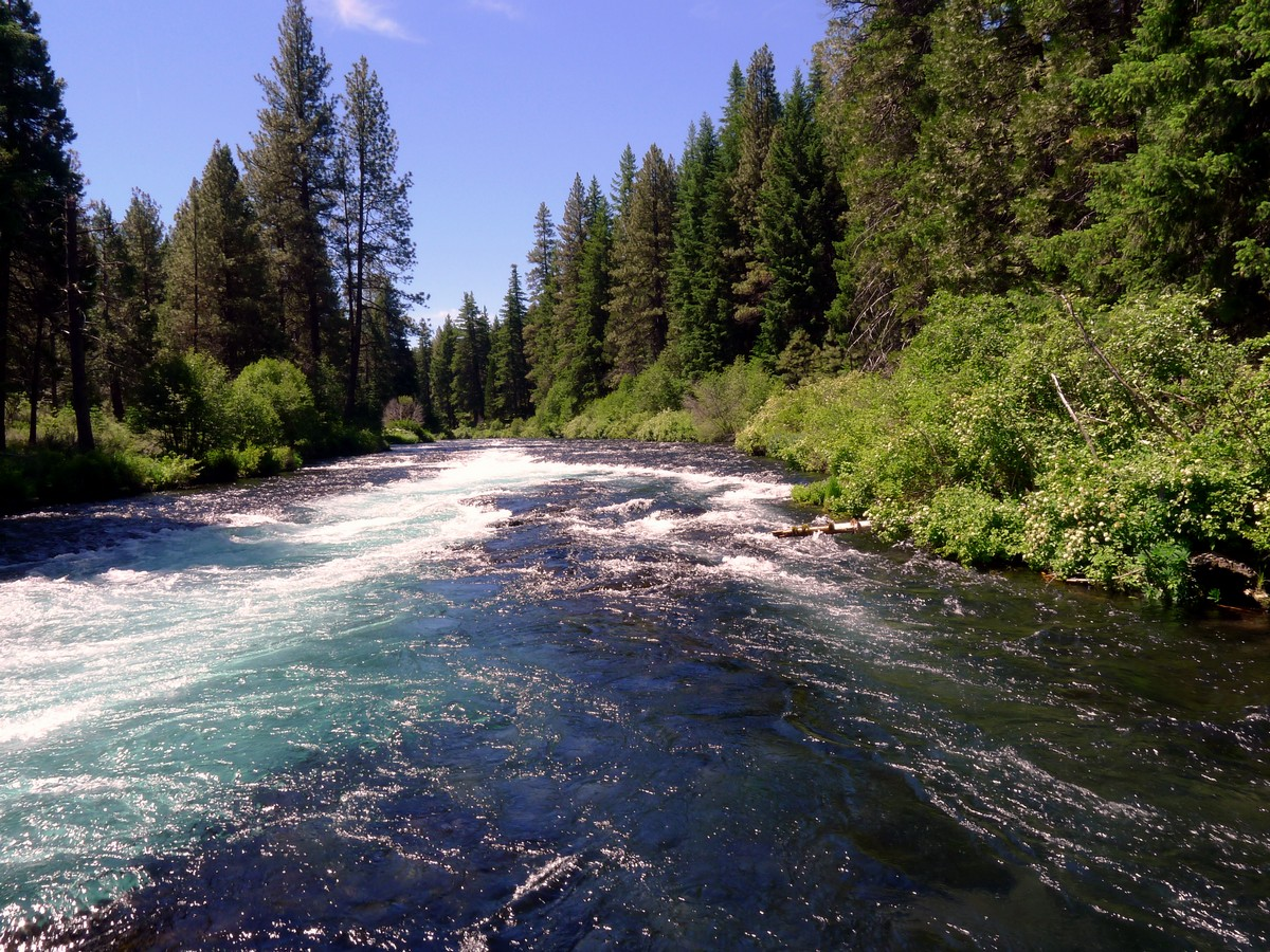 Clear blue water on the West Metolius River Hike near Bend, Oregon