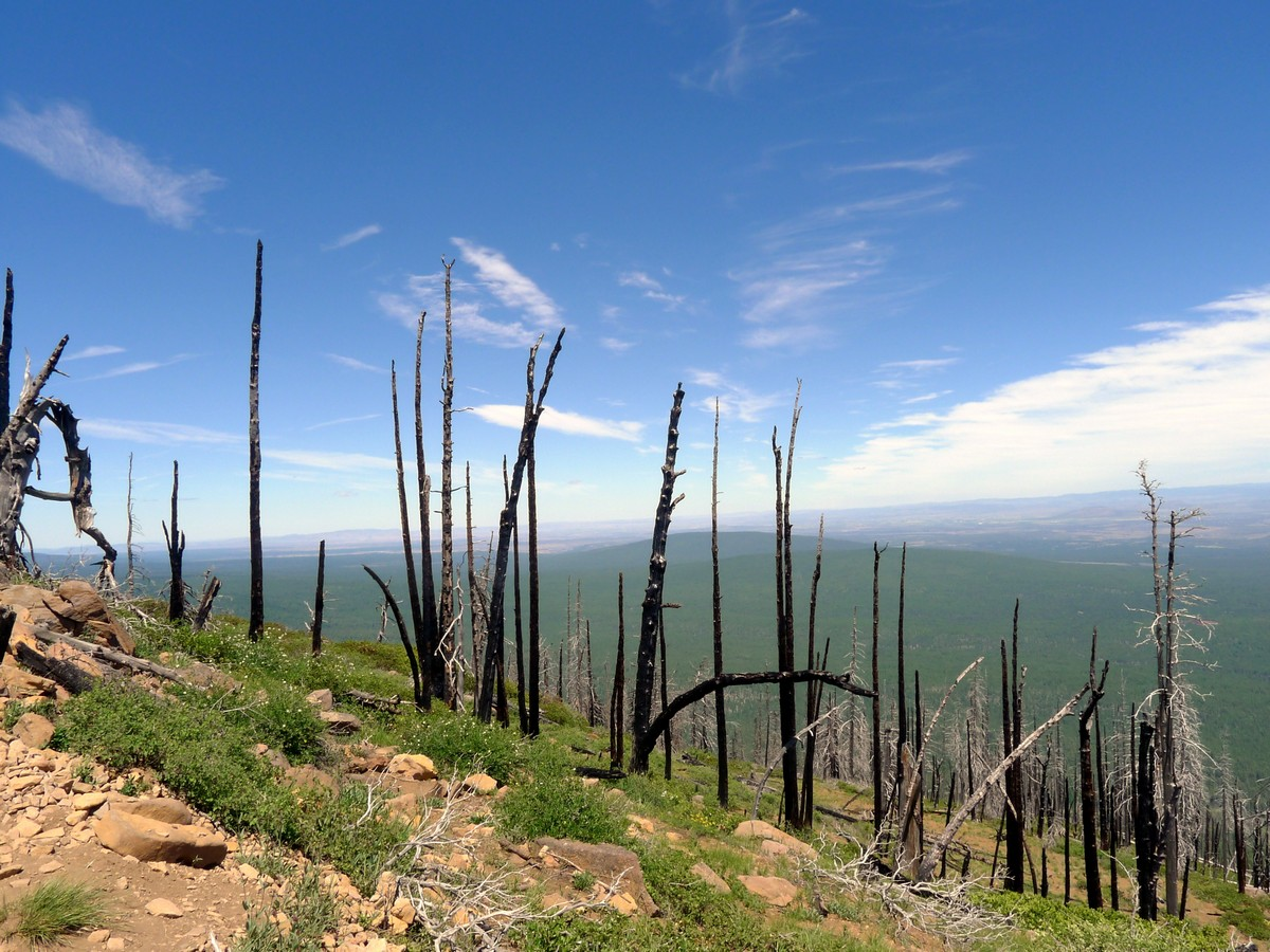 Burnt out forest on the Black Butte Hike near Bend, Oregon