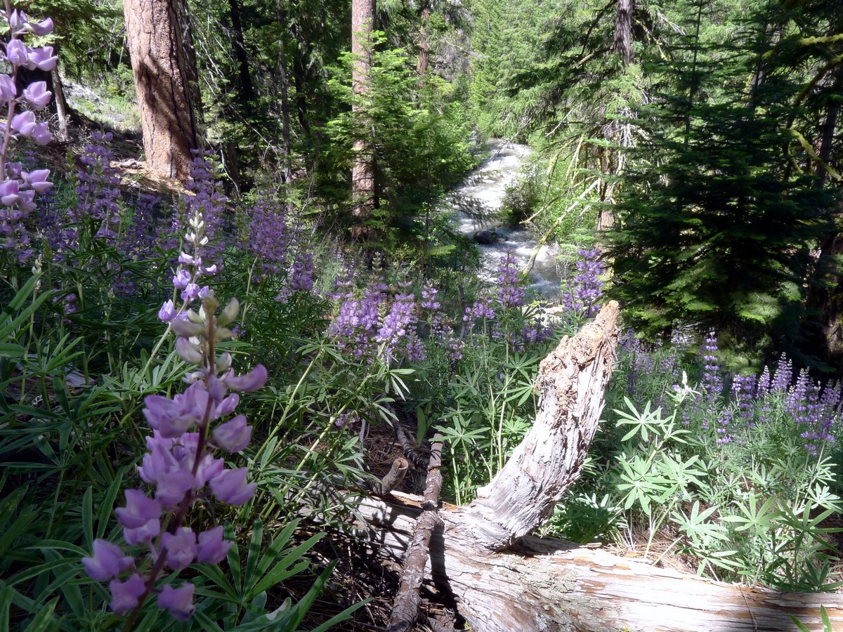Whychus Creek Trail Hike in Bend surrounded by the wildflowers