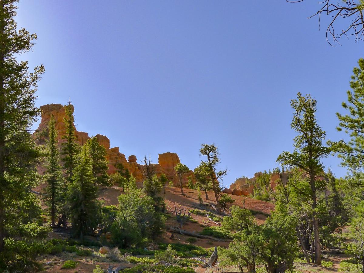 Golden Wall / Castle Bridge Loop trail hike in Bryce Canyon National Park is surrounded by red hoodoos