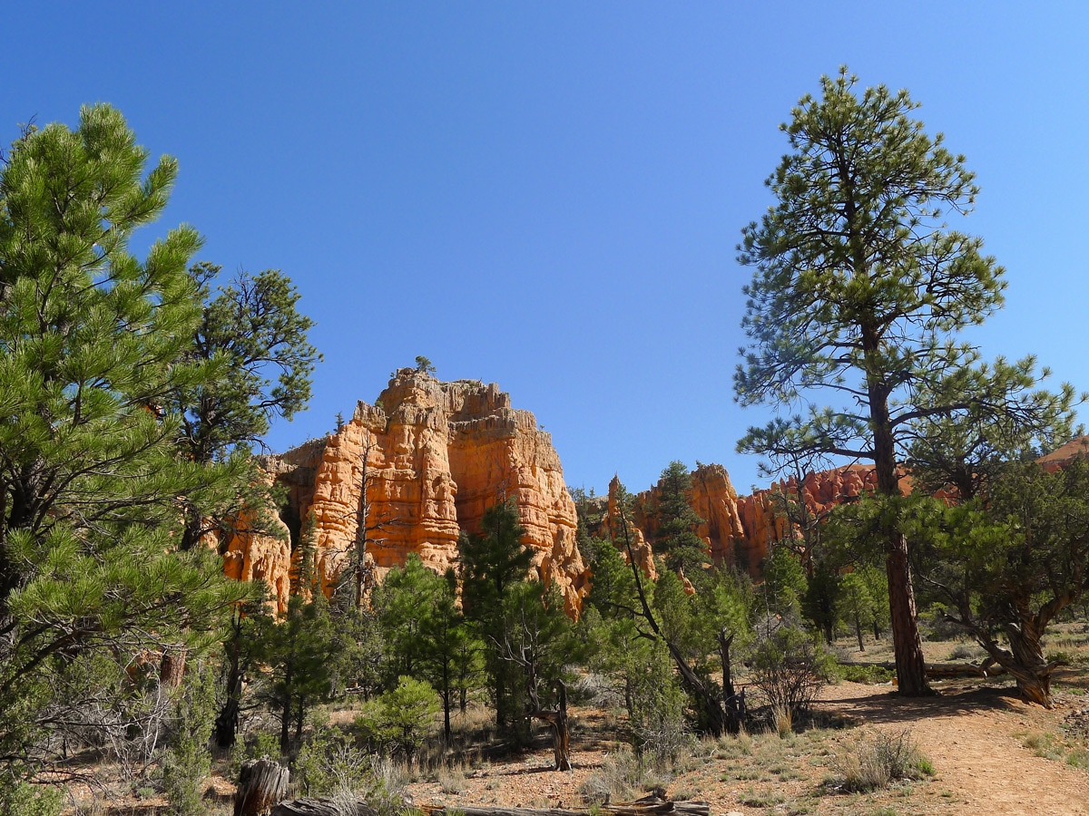Bristlecone Loop trail hike in Bryce Canyon National Park is surrounded by beautiful hoodoos