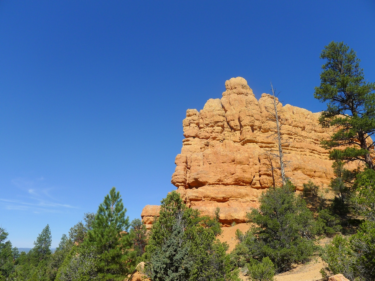 Ribbed rock fins on Bristlecone Loop trail hike in Bryce Canyon National Park