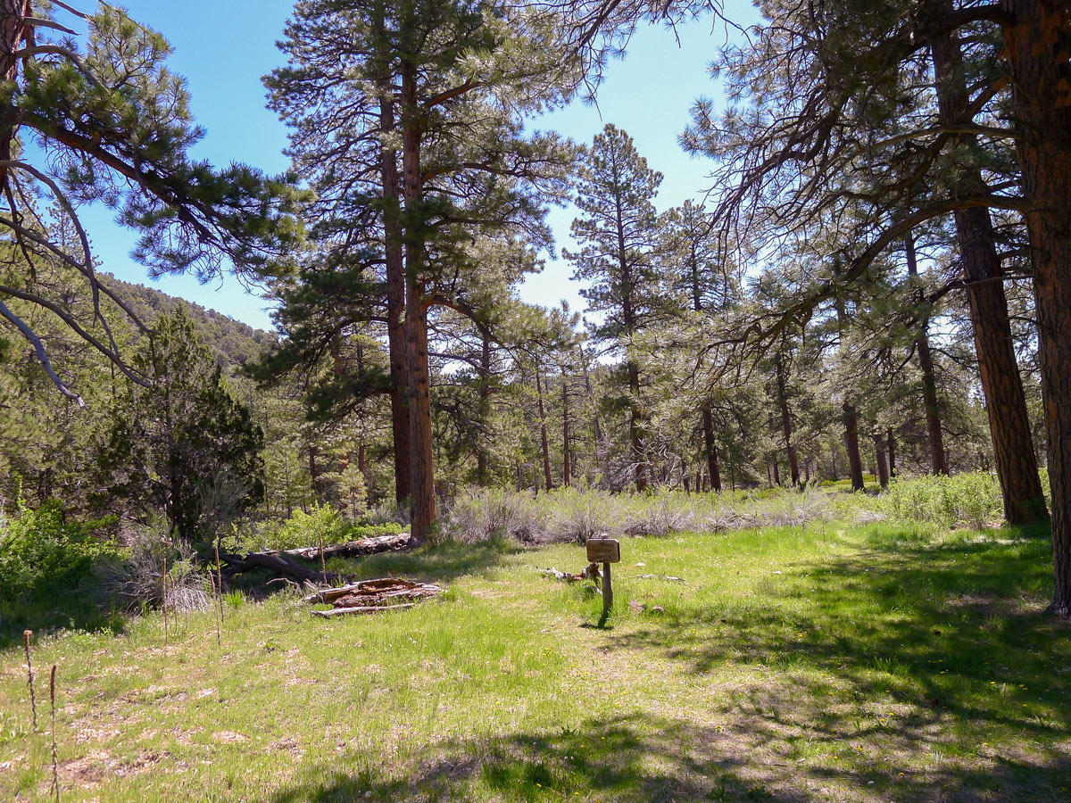 Lush clearing on Cassidy trail hike in Bryce Canyon National Park
