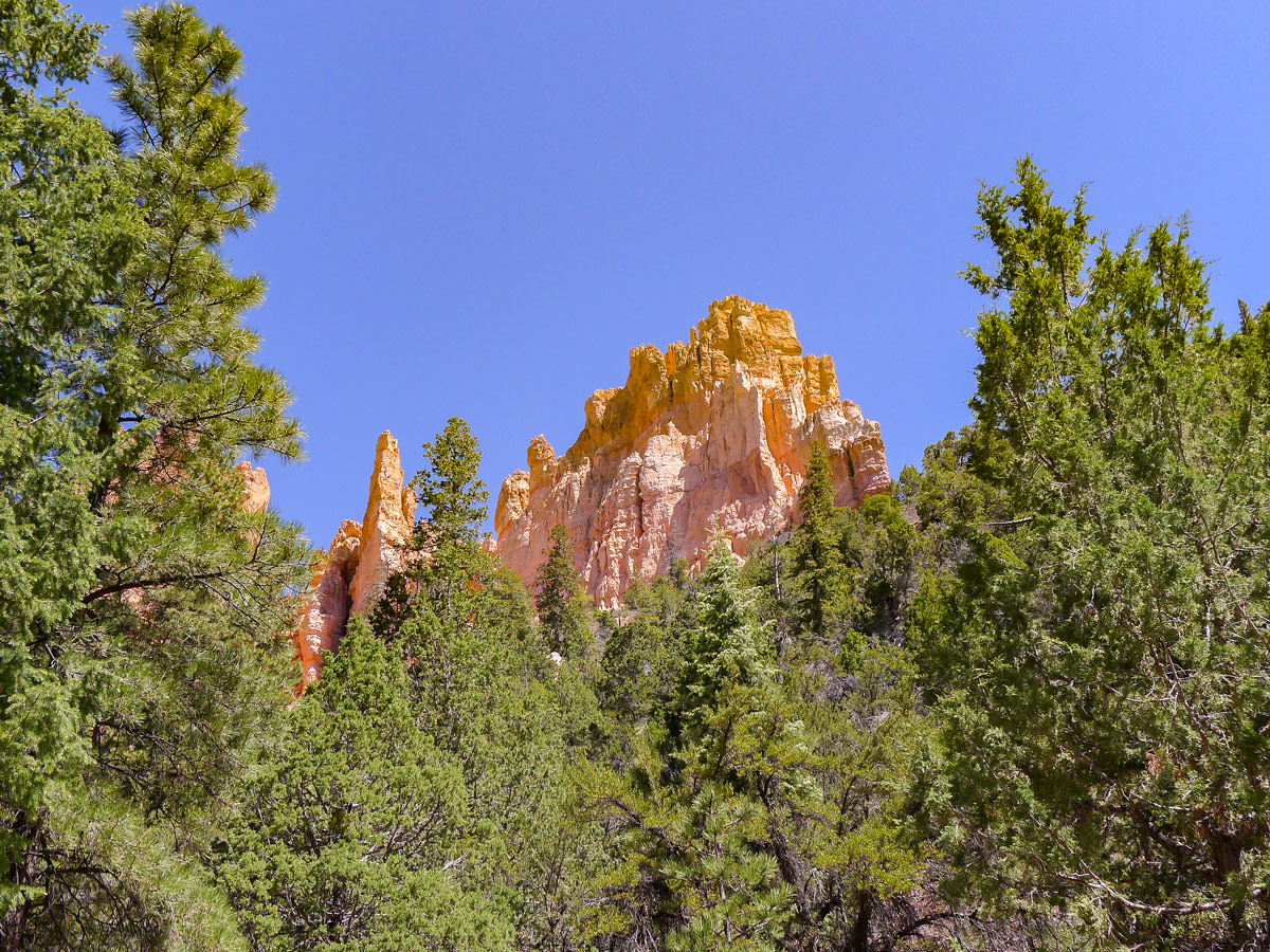 Red towers peeking over the pine trees on Cassidy trail hike in Bryce Canyon National Park