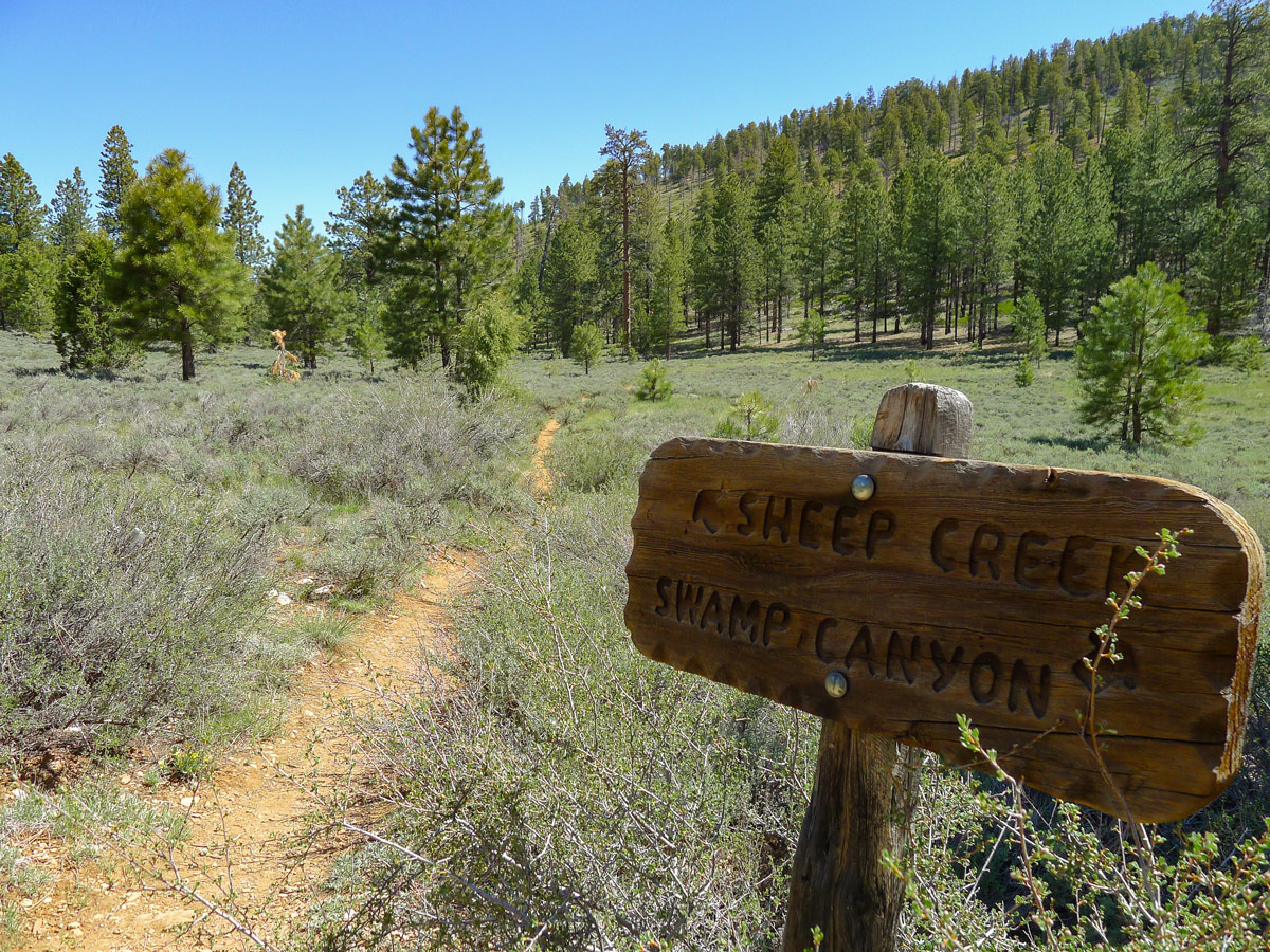 Beginning of trail on Swamp Canyon trail hike in Bryce Canyon National Park