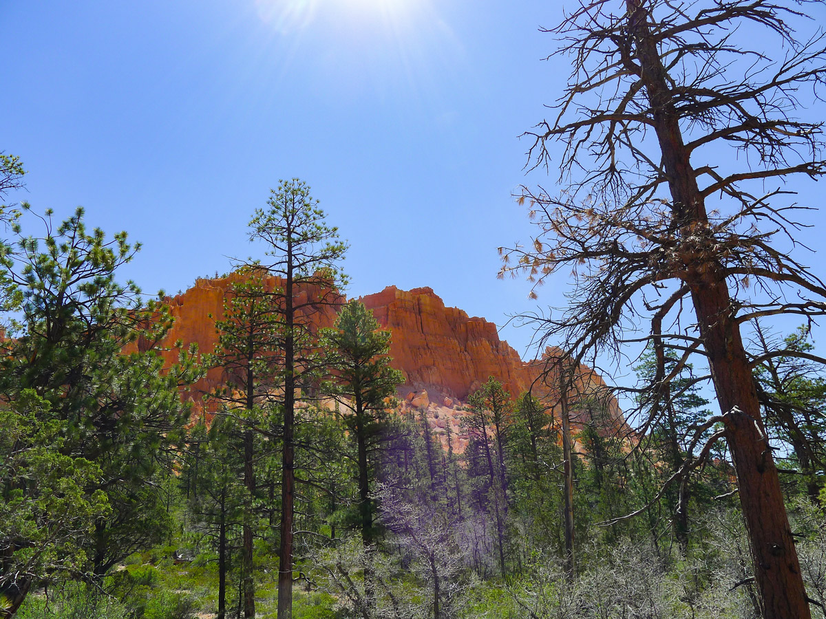 Burnt section of trail on Swamp Canyon trail hike in Bryce Canyon National Park