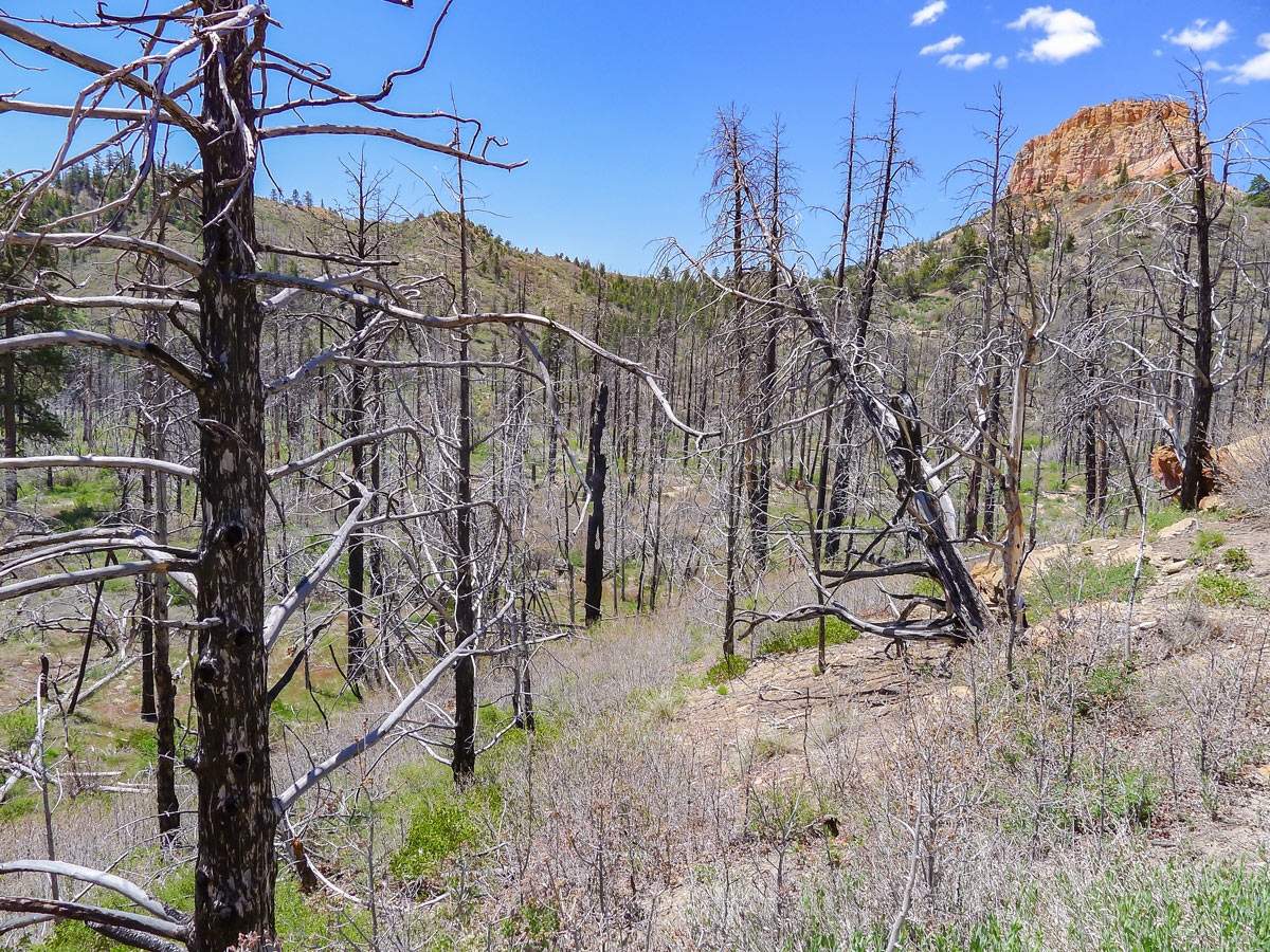 Burnt out section of trail on Swamp Canyon trail hike in Bryce Canyon National Park