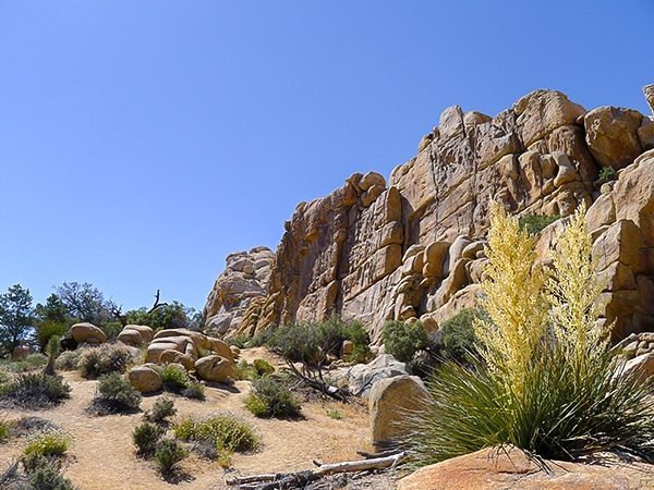 Hidden Valley Loop Trail in Joshua Tree National Park, California