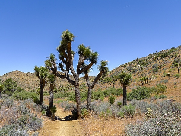 Scenery from the High View trail hike in Joshua Tree National Park, California