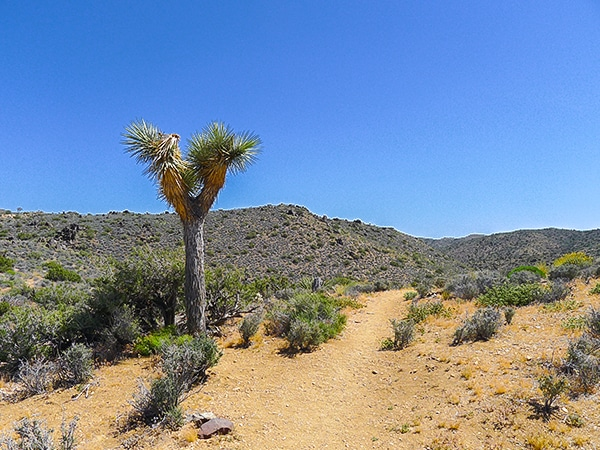 Views from the Lost Horse Loop hike in Joshua Tree National Park, California