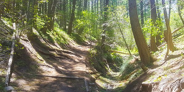 Hiking trail in the Enchanted Forest, Denver