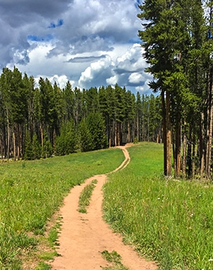 Berrypicker Trail hike in Vail, Colorado