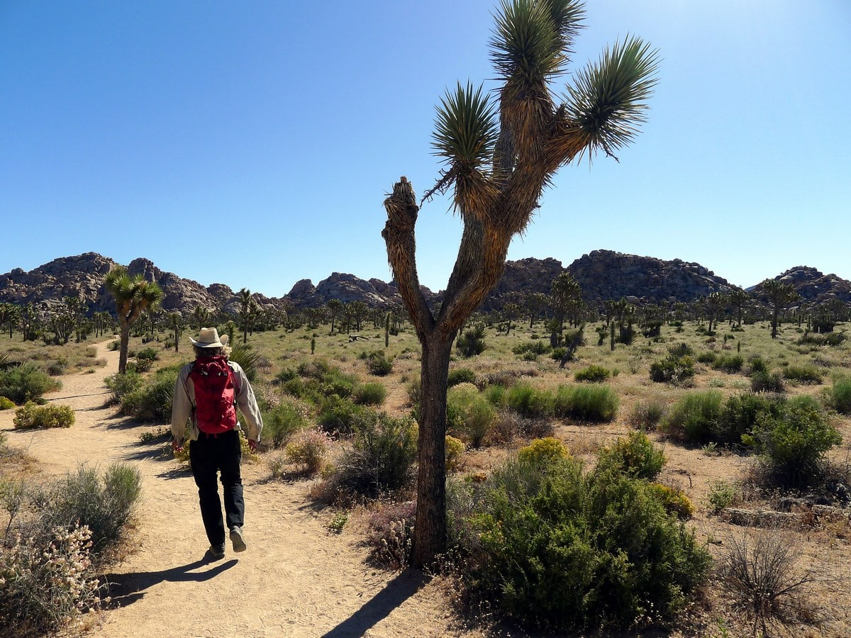The trail across the plane on the Boy Scouts Trail Hike in Joshua Tree National Park, California